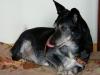 psy-do-adopcji-lipiec2012-26