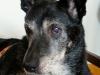 psy-do-adopcji-lipiec2012-27