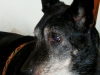 psy-do-adopcji-lipiec2012-29