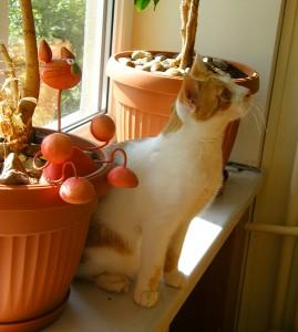 koty do adopcji w Fundacji Canis