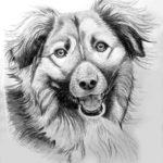 brutus 150x150 Moje rysunki zwierzaczków do adopcji
