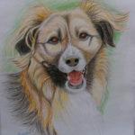 brutuskolor 150x150 Moje rysunki zwierzaczków do adopcji