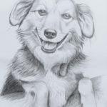 lesio2 150x150 Moje rysunki zwierzaczków do adopcji