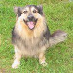 pies do adopcji w Warszawie