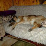 fiona-adoptowana-suka2
