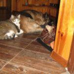 Fiona w nowym domu - pies adoptowany z fundacji