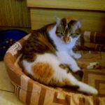 kotka do adopcji warszawa