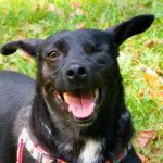 pies do adopcji Czarnuś