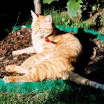 bezpieczeństwo kota wychodzącego