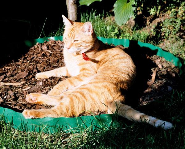 Czy kot na dworze jest szczęśliwszy?