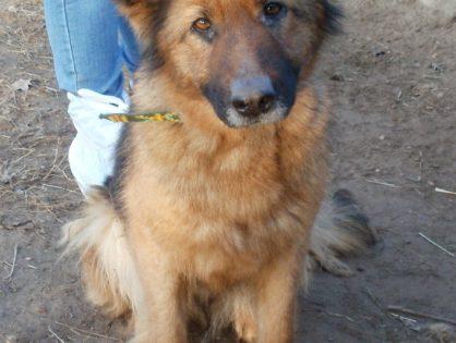 udana adopcja, KLEO ur. 2012 r. znalazła dom