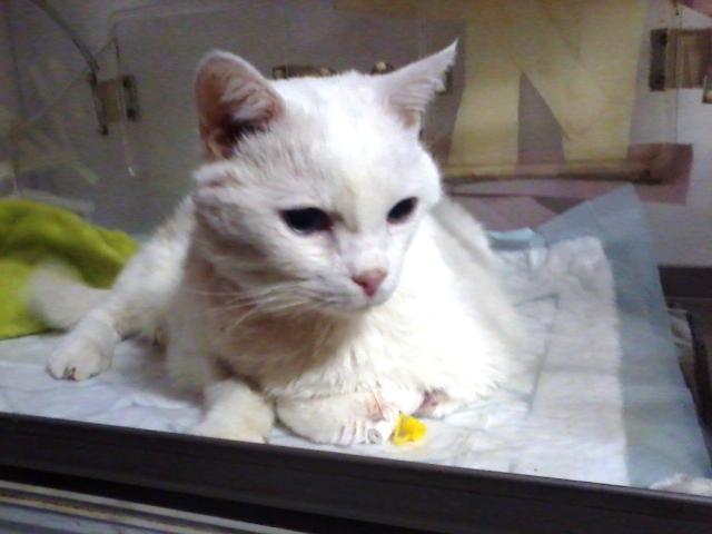 kot prośba w wsparcie na leczenie kota