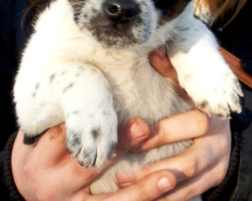psy do adopcji fundacja canis