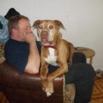 Fiodor pies do adopcji