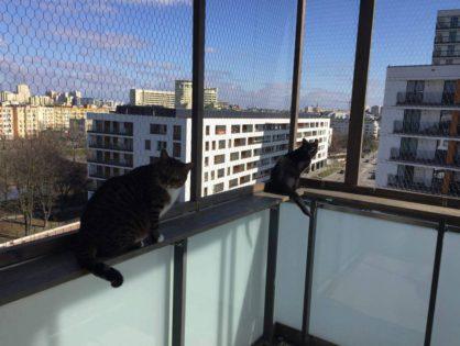 Rumcajs i woliera balkonowa