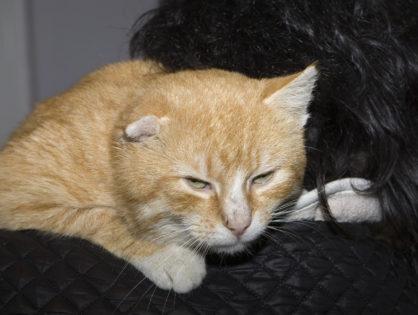 Kot Ryszard szuka domu