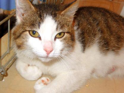 Koteczka Paris szuka domu