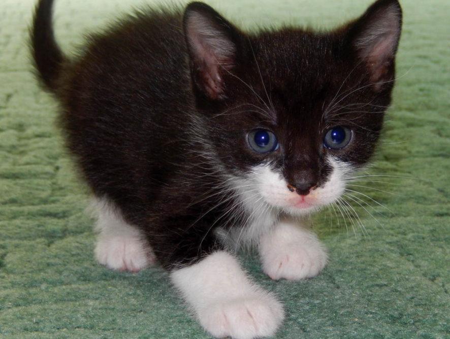 Kotek Monako szuka domu