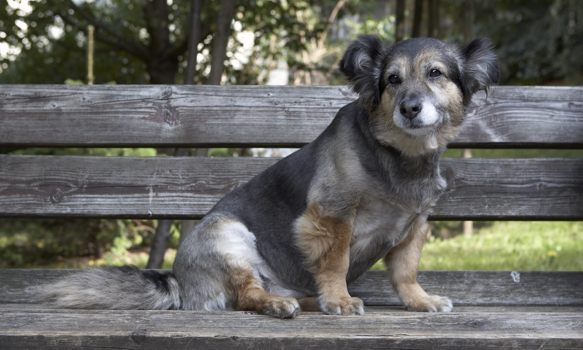 Fundacja Canis