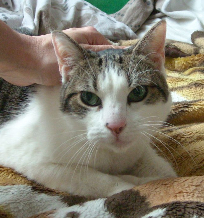 Koteczka Kama znalazła dom