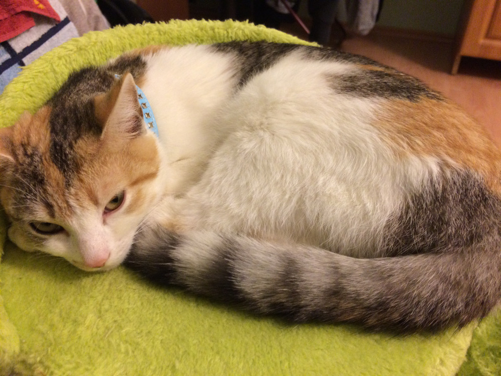 Koteczka Pamuk szuka domu