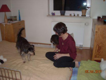Adopcja Oresta
