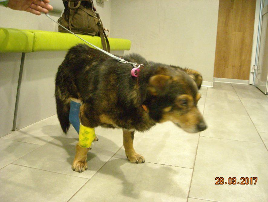 Operacja Oresta- prosimy o wsparcie