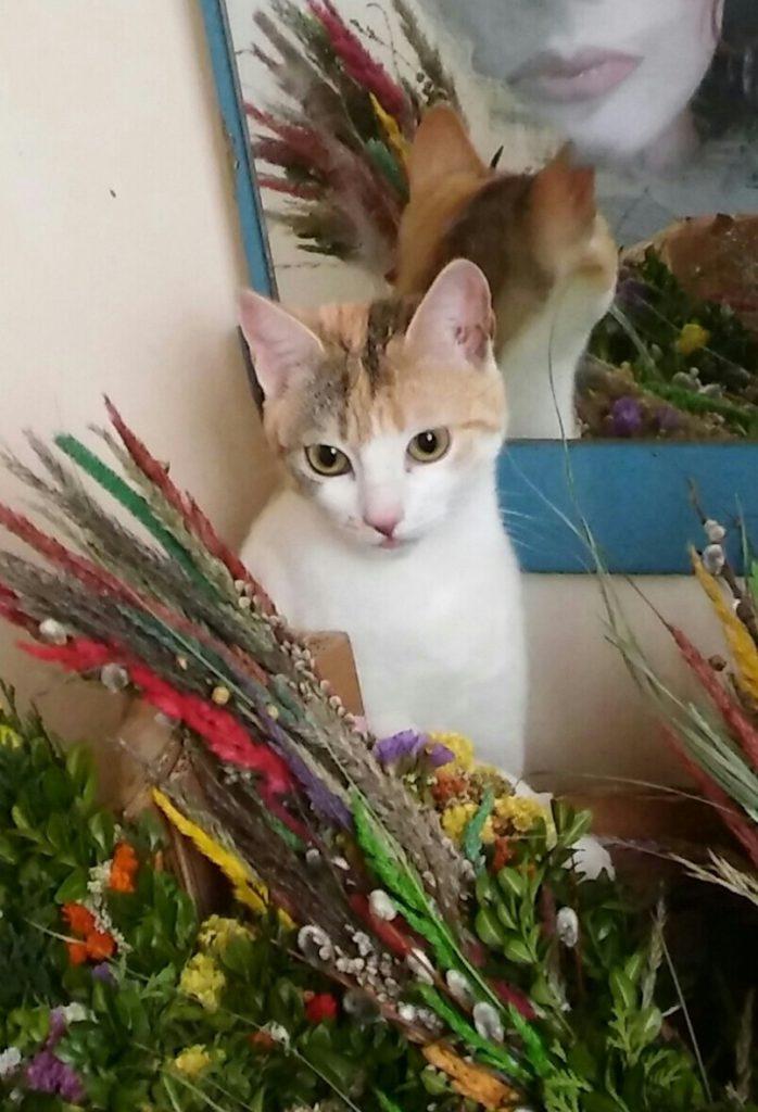 Przypominamy młodą koteczkę o imieniu Pamuk.