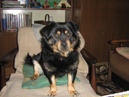 Piesek Czesław adoptowany w 2009 roku