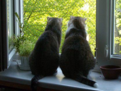 Nieustannie przypominamy o zabezpieczeniu okien/balkonów