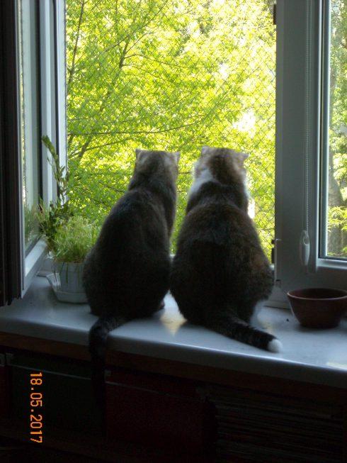 Kastor i Weronka - tych kotów nie można rozdzielić