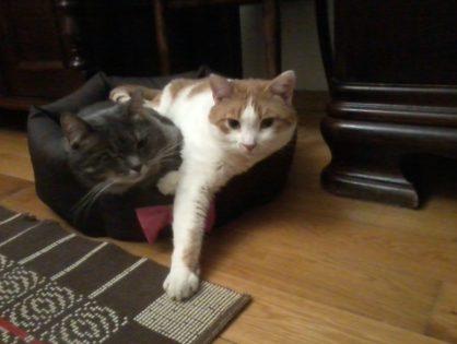 Słoneczko i Sasanka znalazły dom razem