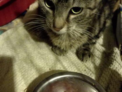 Pomóżmy kotkowi Bezikowi uratować łapkę
