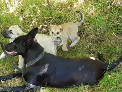 Nowe zdjęcia Viktorii i szczeniaków