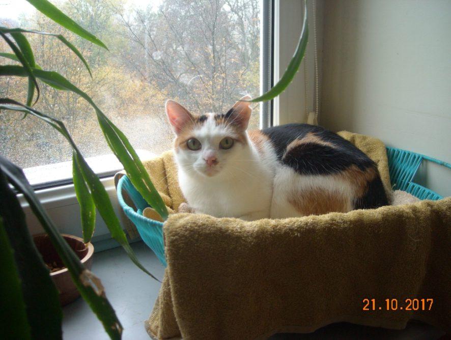 Aisza nadal czeka na dom