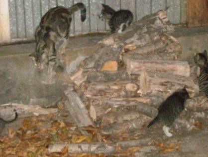 Kocia rodzinka szuka domu