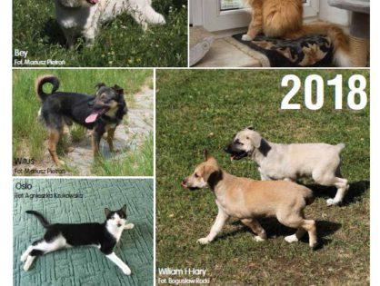 Kalendarz Canis na 2018 rok