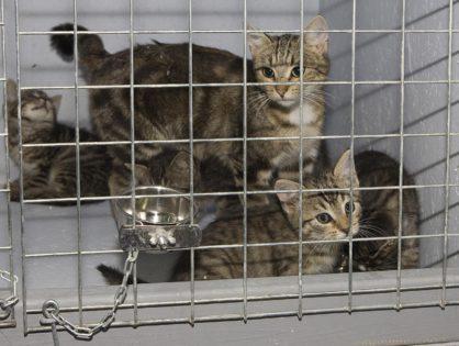 Pilnie szukamy domów dla kociaków