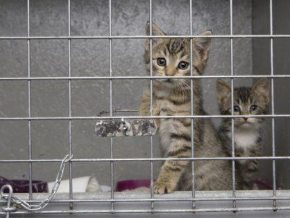 Kocia rodzinka z Białołęki w Warszawie została zabrana z psiej budy i czeka na domy.
