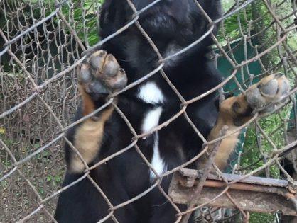 Czaruś szczeniaczek szuka domu na zawsze