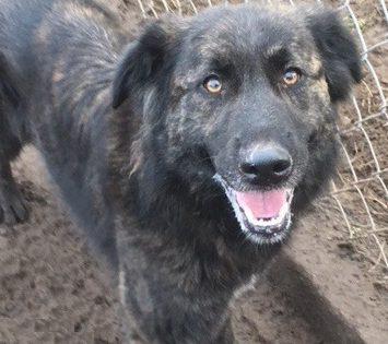 Halka – ideał psa szuka domu