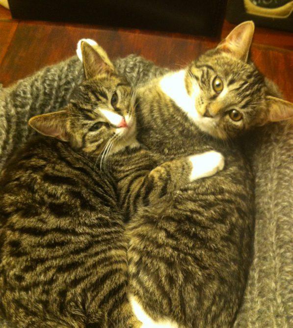 Alissa i Titinka szukają domu