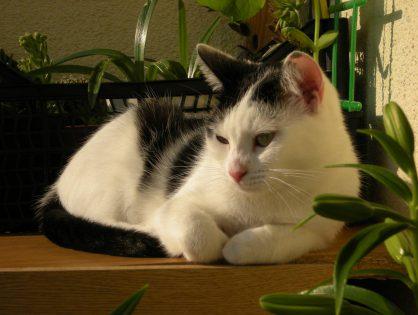 Wiadomości od Afery i Skierki - wiersze o kotach