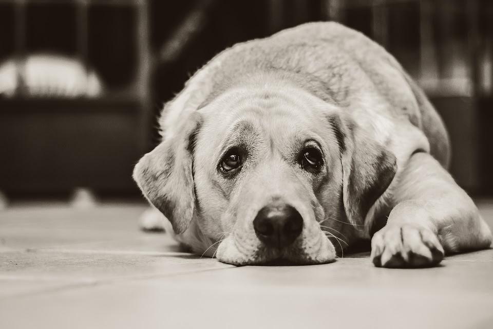 Dlaczego należy zarejestrować dane w SAFE-ANIMAL