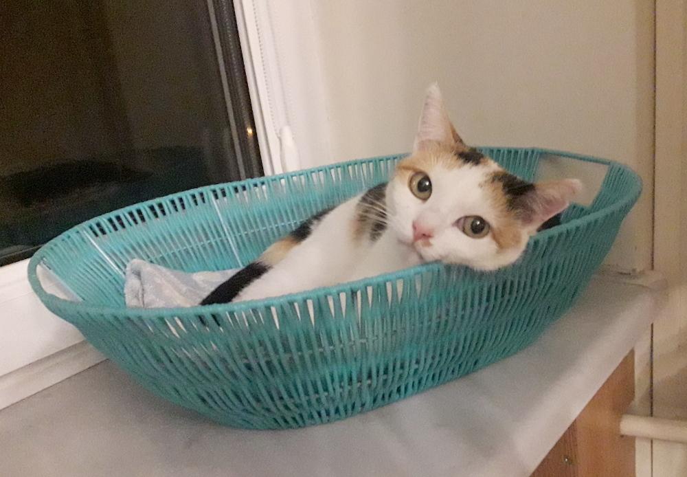 Koteczka Aisza nadal czeka na dom