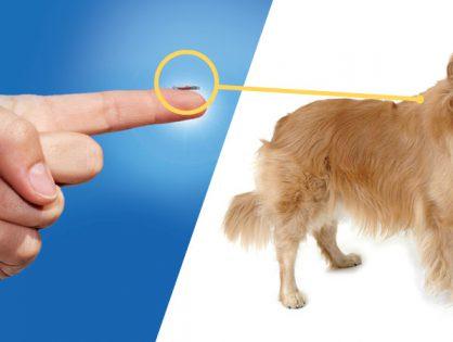 Darmowe czipowanie psów i kotów