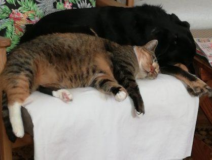 Piesek Czaruś i kotka Mela - wiadomości