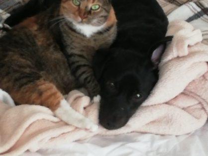Mela i Czaruś