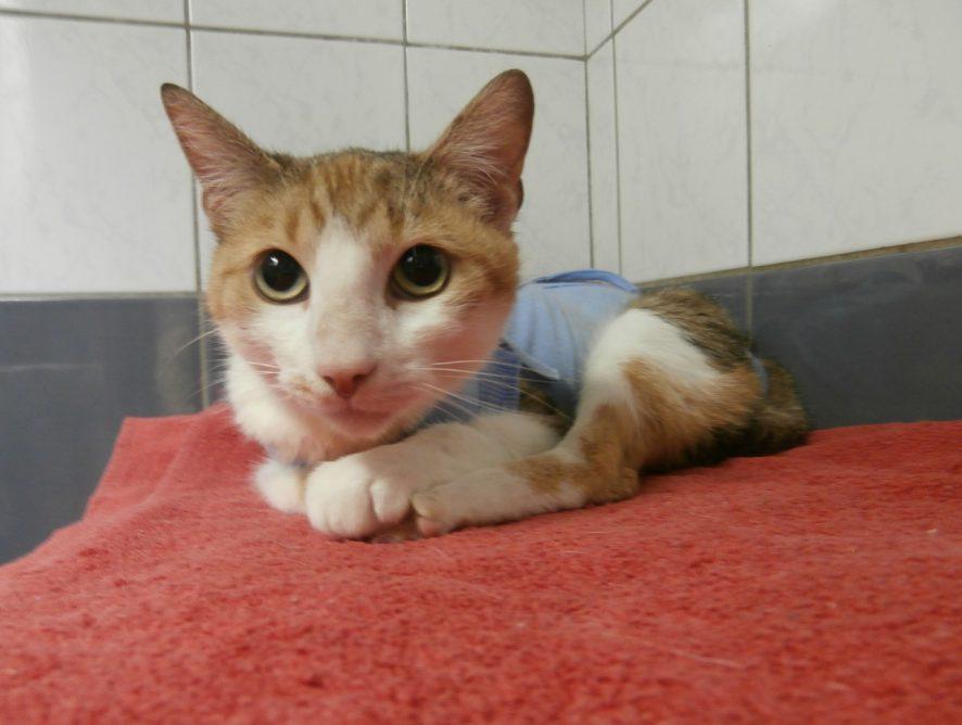 Koteczka Sonia szuka domu