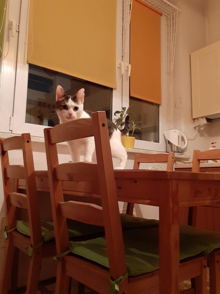 Kotka Cytrynka znalazła dom
